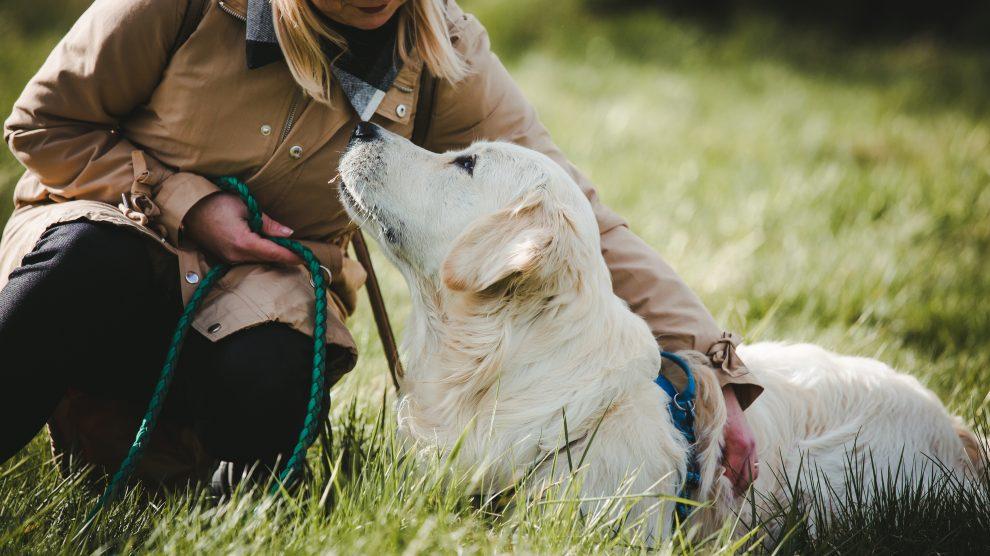 DOGOTERAPIA – Terapia z udziałem psa