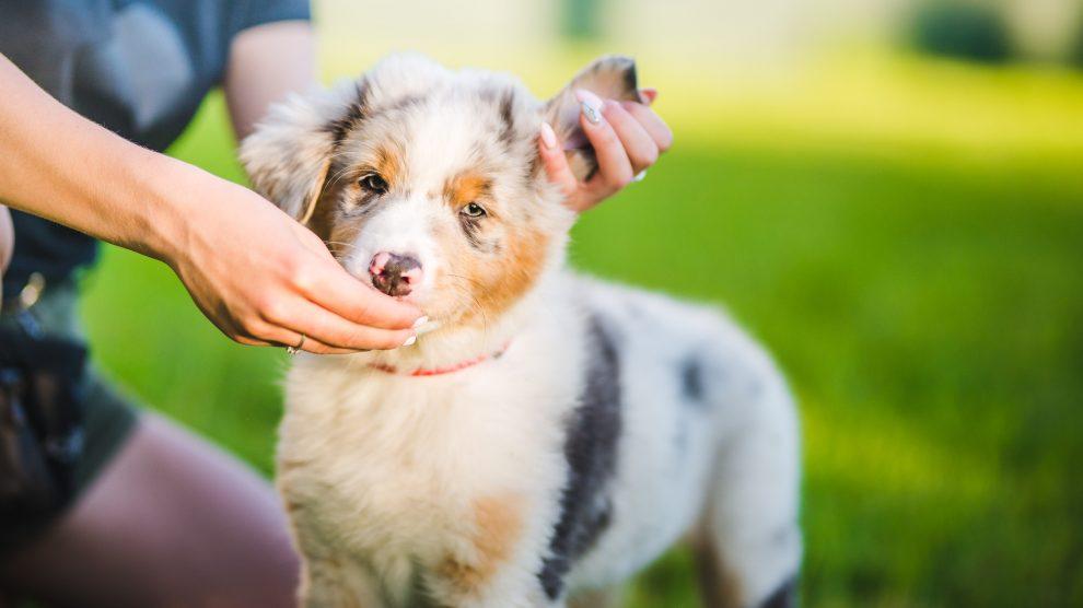 Zapobieganie pojawianiu się zachowania agresywnego u psa. Cz.II