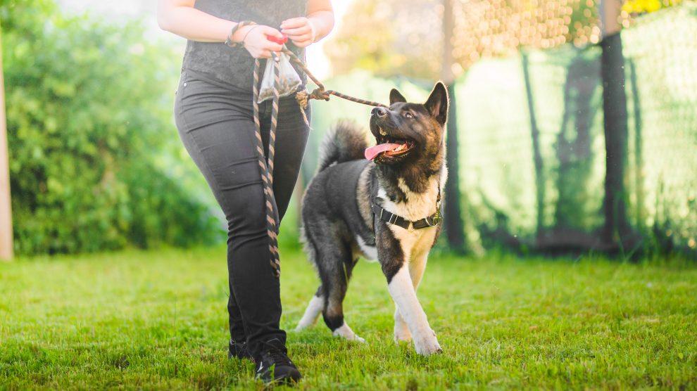 Spacer z psem na luźnej smyczy.