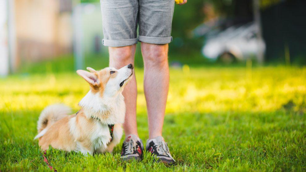 Jak wybrać dobry kurs szkolenia psa?