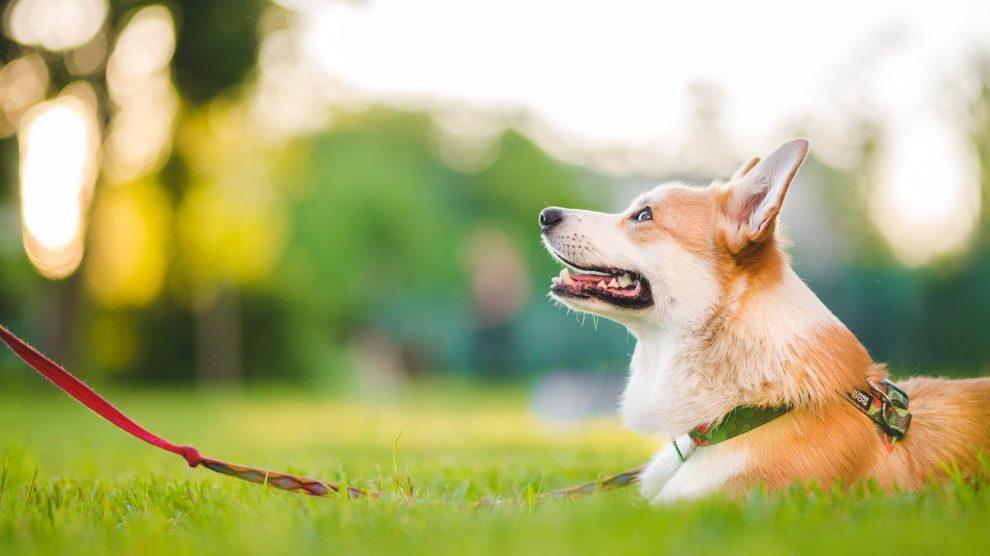 Szkolenie Podstawowe – dla psów od 4 miesiąca życia