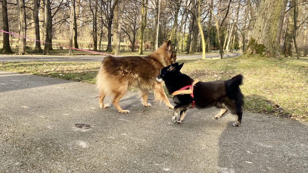 Jak zapobiegać agresji psa w środowisku osiedlowym?