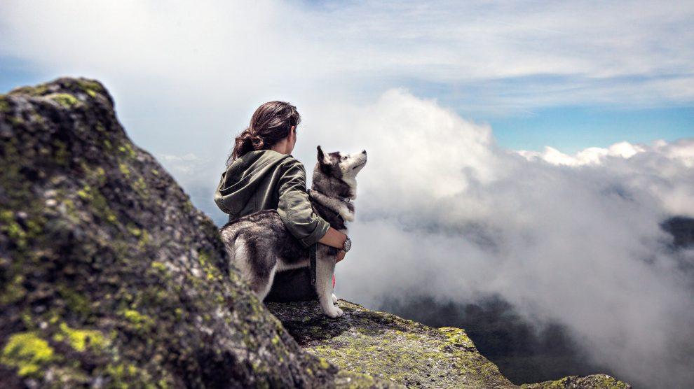 PORADNIK Pies i wakacje.
