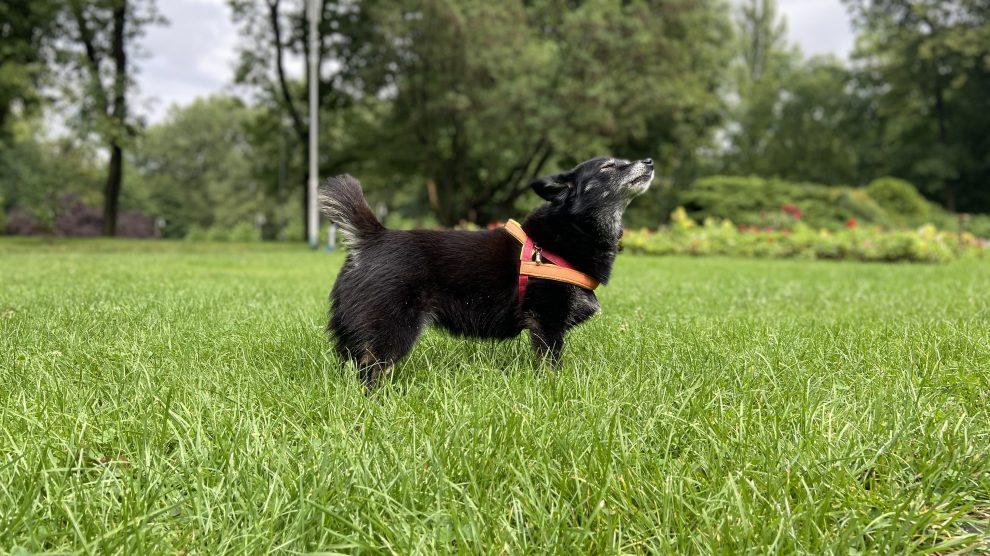 Jak widzi, słyszy i czuje Twój pies?