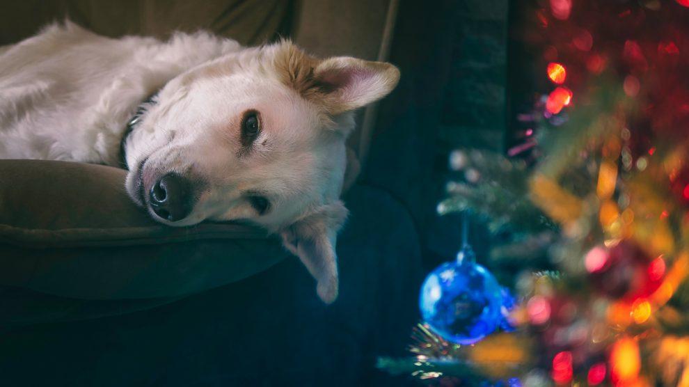 Pies mówi nie tylko w wigilię.