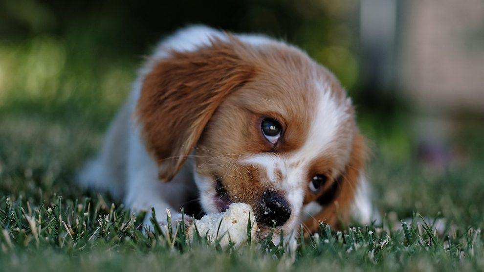 Zapobieganie pojawianiu się zachowania agresywnego u psa, cz. 1.